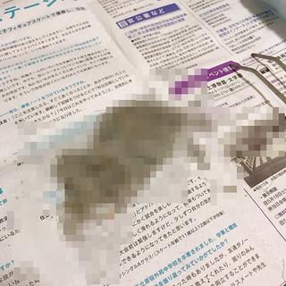 Maintenance of rumba used in Japan
