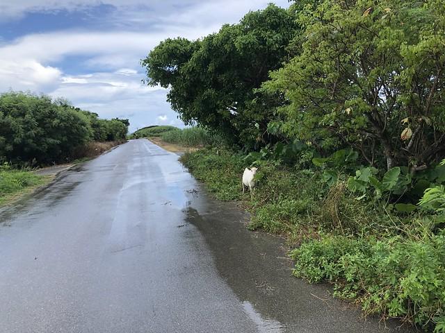 波照間島サイクリング