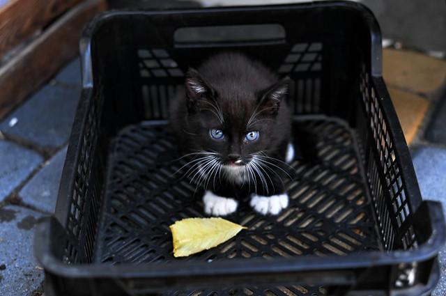 kot w skrzynce