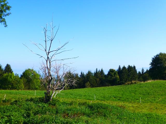 09.21.19.L'arbre mort
