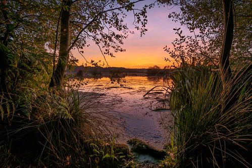 delamere forest blakemere moss sunset september 2019