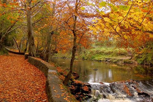 swanspark buncrana donegal landscape autumn fall nature trees cranariver ireland