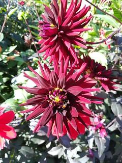 Flowers (Double header)