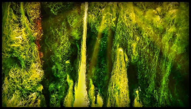 Unterwasserflora im Dorfbrunnen