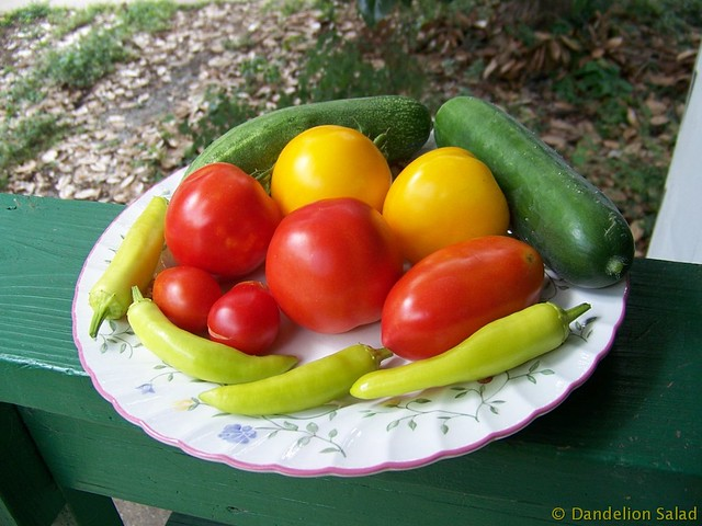 Tomatoes and Cucumbers and Banana Peppers Harvest