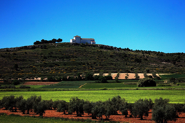 Gli Uliveti - Olivares - Olive trees