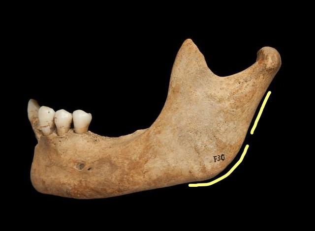 Female mandible
