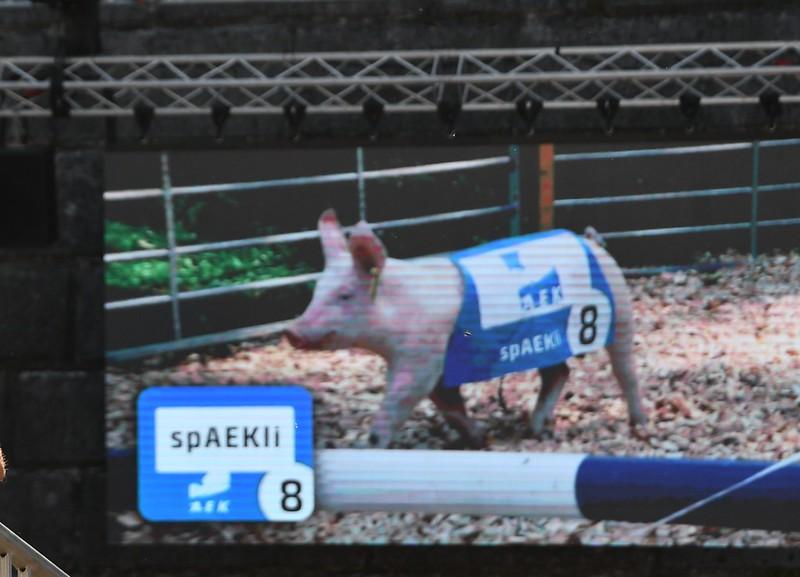 Pig Racing at HESO 2019 (15)