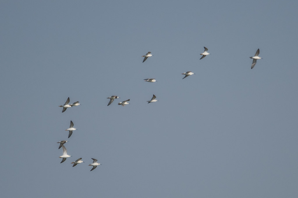 Shore Birds (4 of 4)