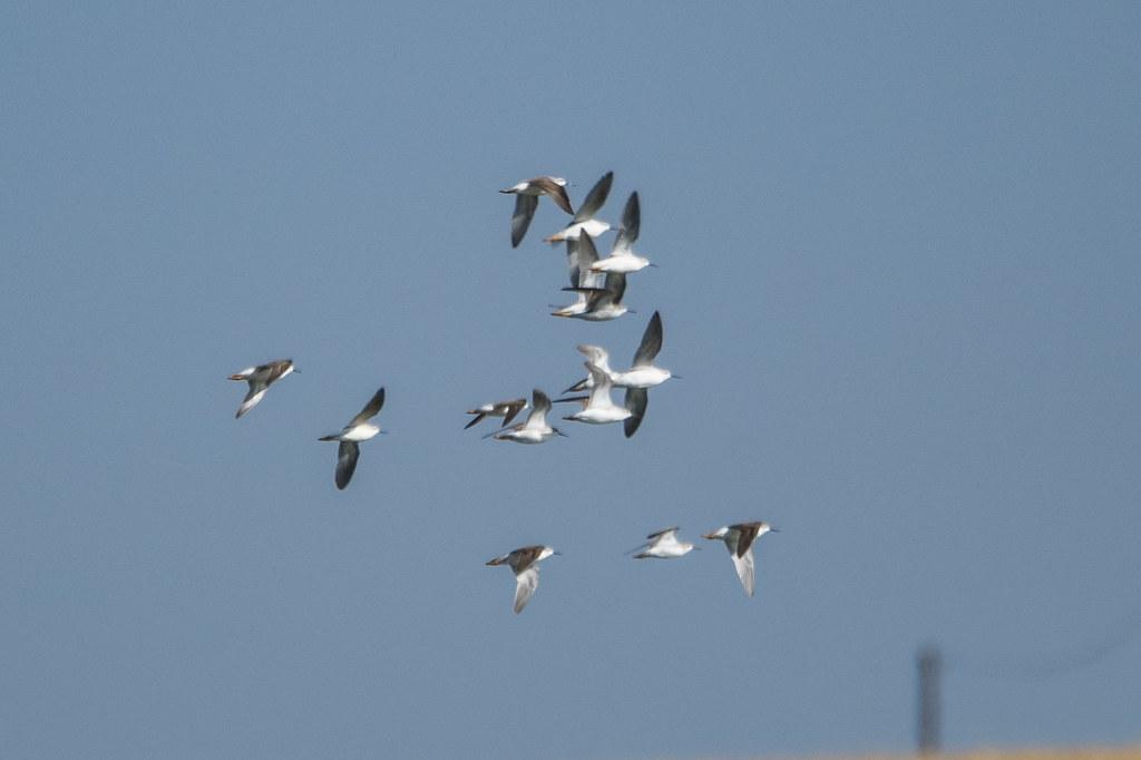 Shore Birds (2 of 4)
