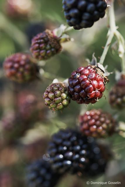 Fruits de saison  /2