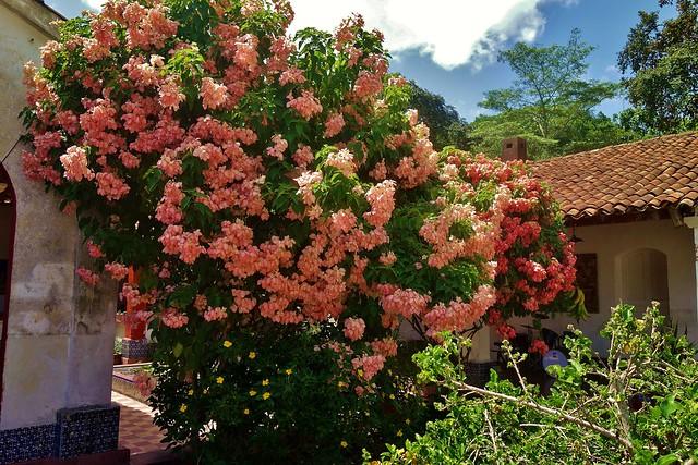 MEXICO, Yucatán ,  Tabasco, Villahermosa- Parque, Fantastische Blütenpracht 19286/11963