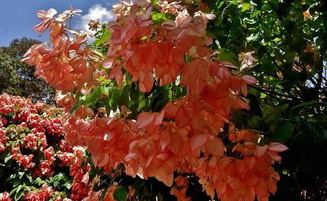 MEXICO, Yucatán ,  Tabasco, Villahermosa- Parque, Fantastische Blütenpracht 19287/11964