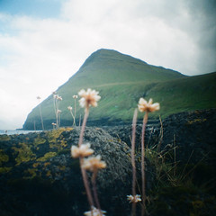 Faroe Dreams