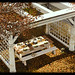 ChiMia - Light Rustic Pergola