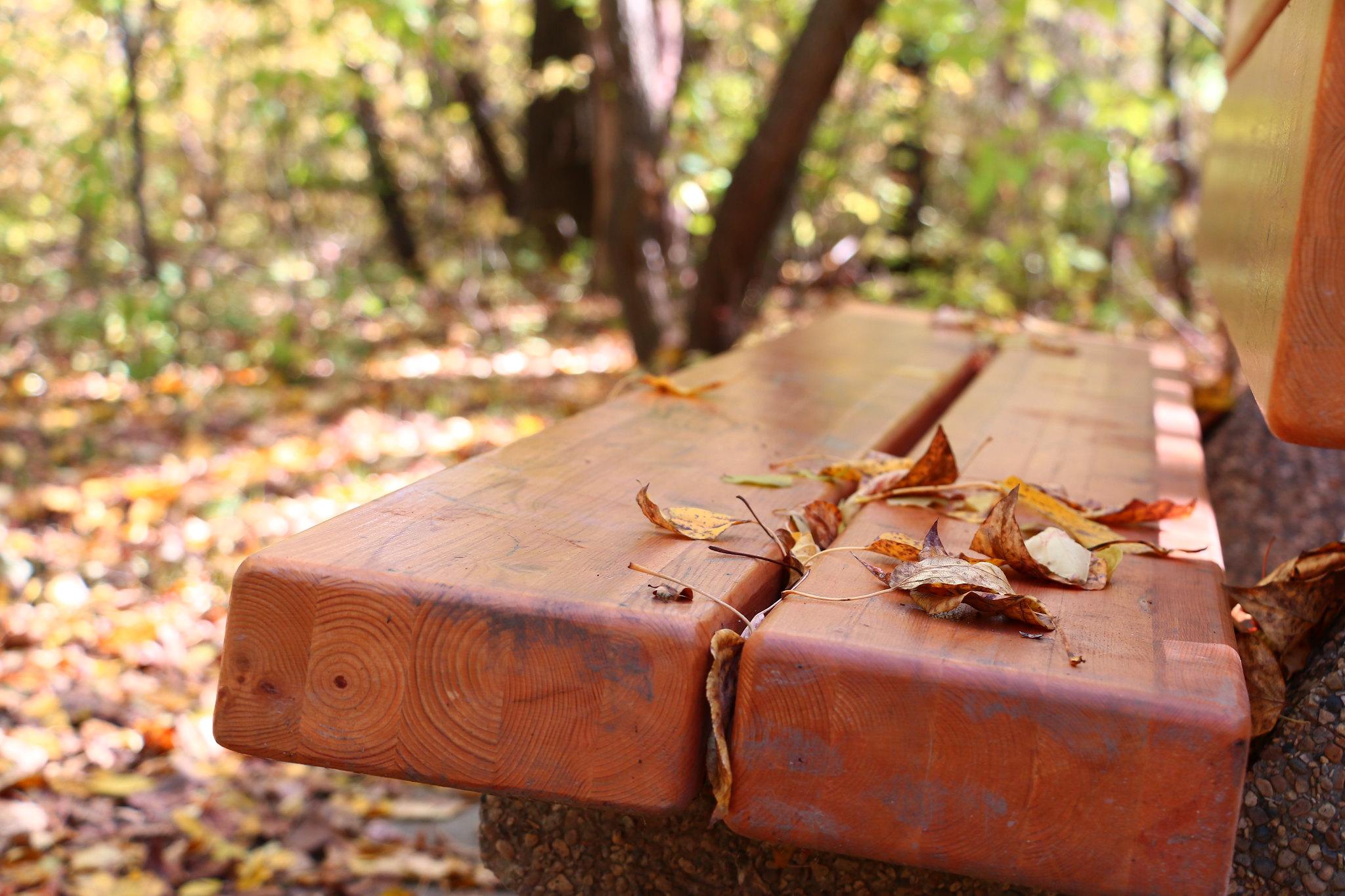 Leaves Left Behind (SOTC 342/365)