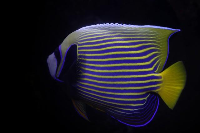 striped by design