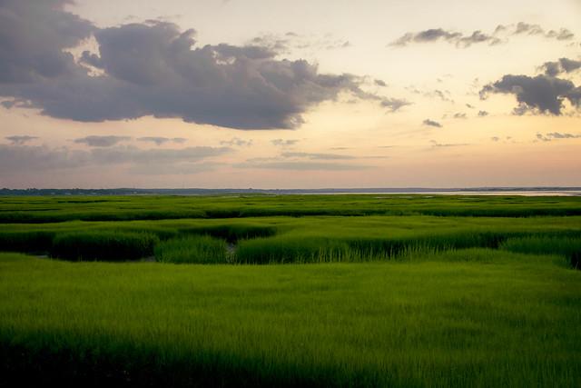 sea of green