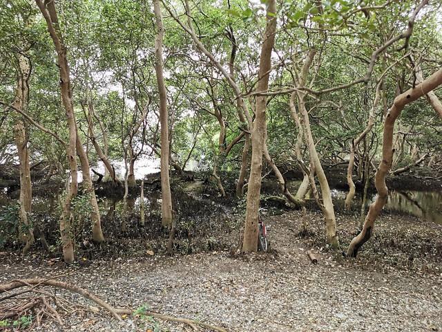 LPPCHEA Las Piñas Parañaque Wetland Park