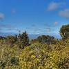 Snowy maunga in the distance #kakepuku #ruapehu #ngaruahoe #trailrunning