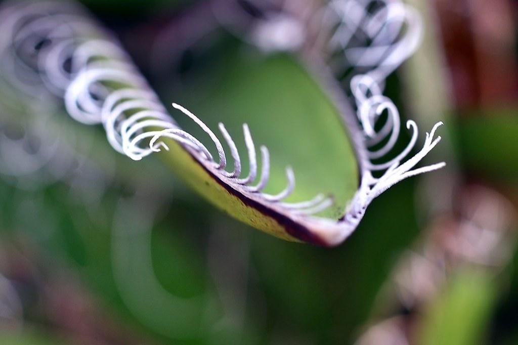 una foglia coi baffi - a leaf with mustaches