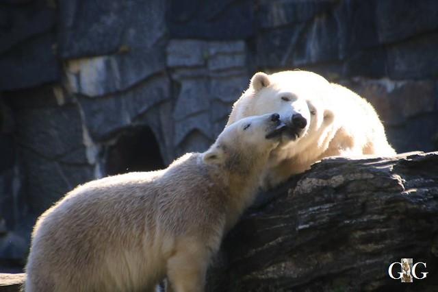Besuch Tierpark Friedrichsfelde 21.09.201927