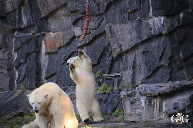 Besuch Tierpark Friedrichsfelde 21.09.201995