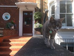 Friendly London cat