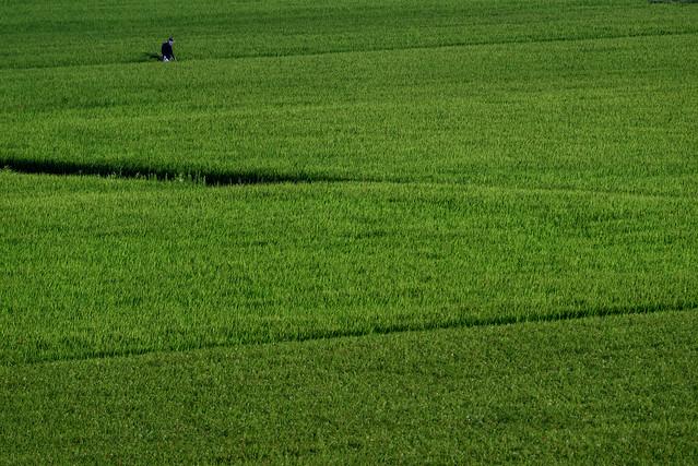 緑の絨毯 #2ーGreen carpet #2