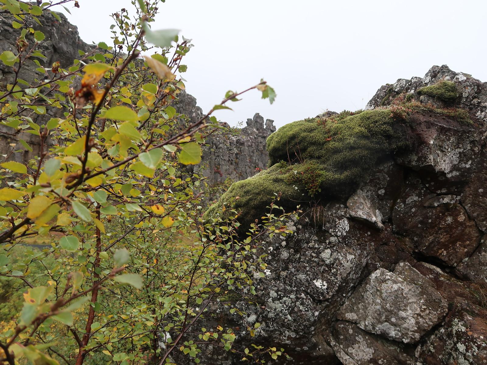 5D_Vik-Reykjavik_Þingvellir (Thingvellir) National Park, 1.Parlament 10-18.Jh.