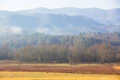 Cades Cove in the early spring
