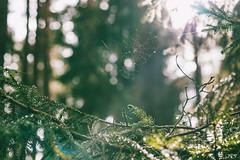 Spiderweb | Kaunas county