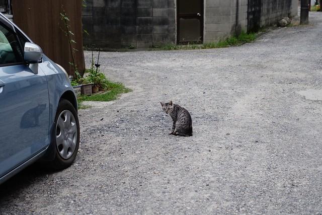 Today's Cat@2019-09-22