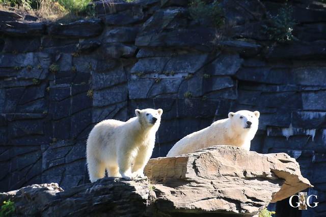 Besuch Tierpark Friedrichsfelde 21.09.201975