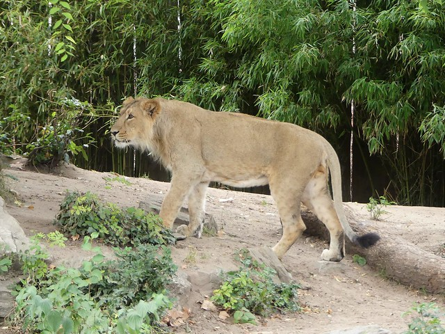 Zoo Frankfurt
