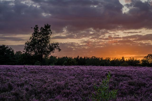 Sunset over the Lüneburg Heath