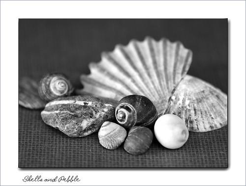 Shells & Pebble