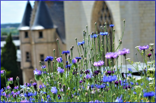 Flowers & history: In the gardens of the Angers castle, France -3