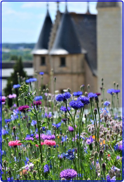 Flowers & history: In the gardens of the Angers castle, France -2