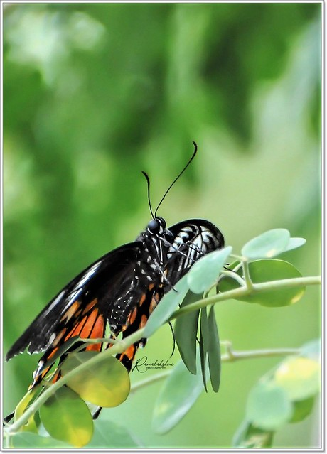 """""""The wings of transformation are born of patience and struggle"""""""