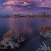 Pink And Purple Moment At Mono Lake