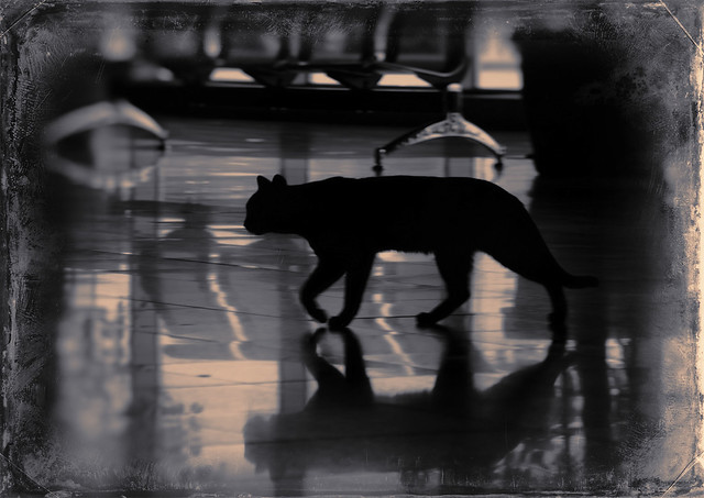 Cat_Siloute_Vintage