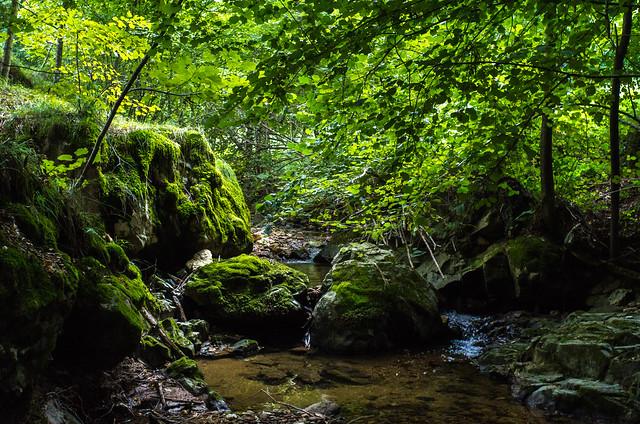 verde lungo la roggia