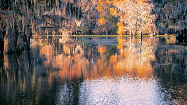 Caddo Lake Cypress Swamp