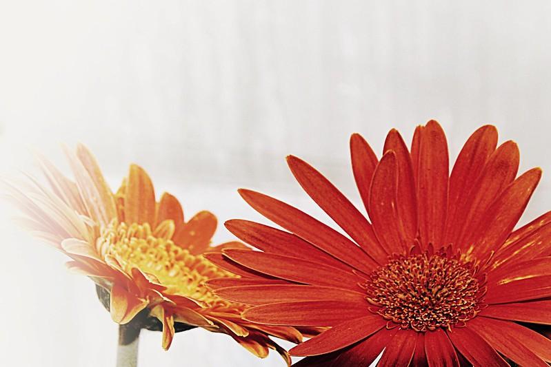 Brampton Ontario - Canada - Alderlea Mansion  - Garden- Flowers