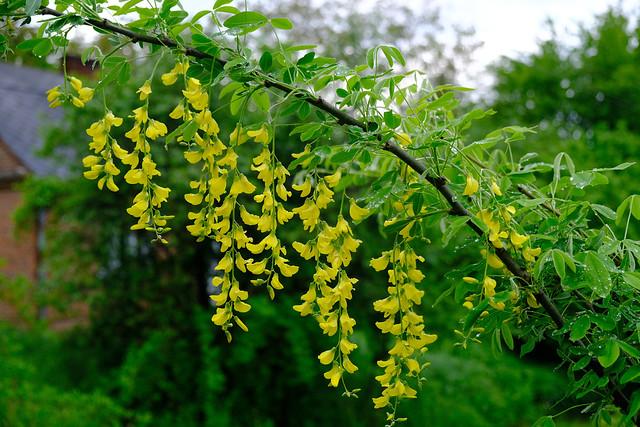 Growing yellow