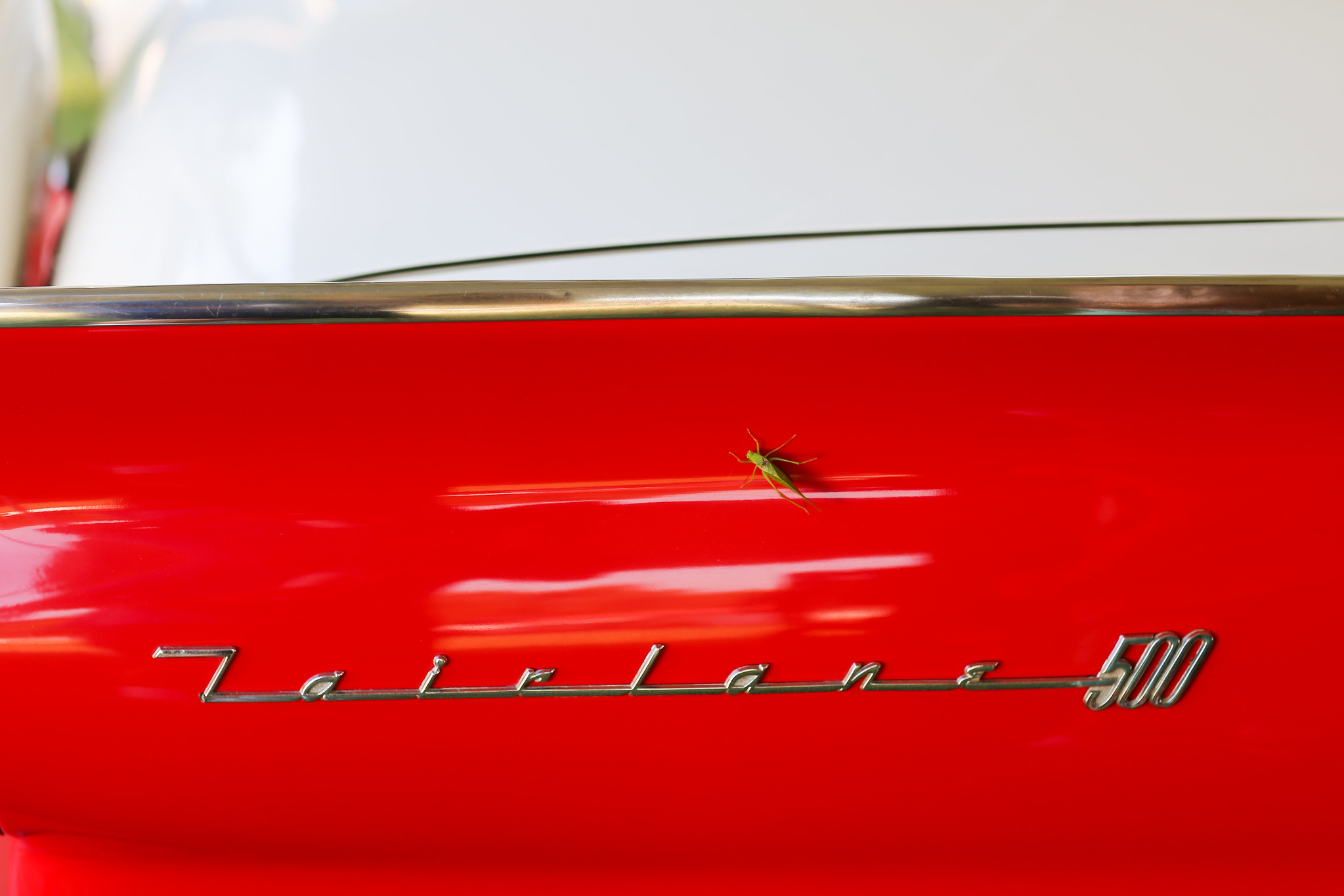 Fairlane 500 with katydid