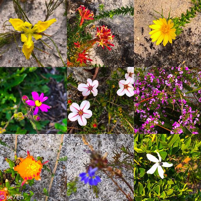 alltheflowers