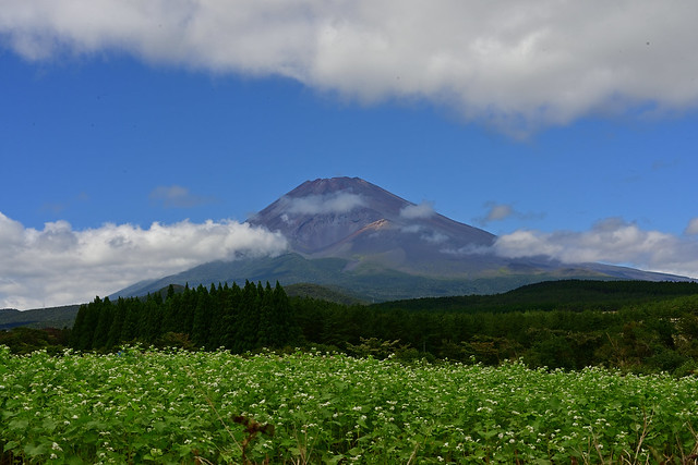 Mt.Fuji and Buckwheat flower.