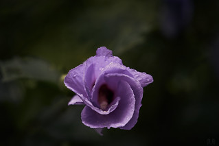 Brother Flower (2236) [4] 2